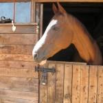 Боярский конный клуб «Вояж»