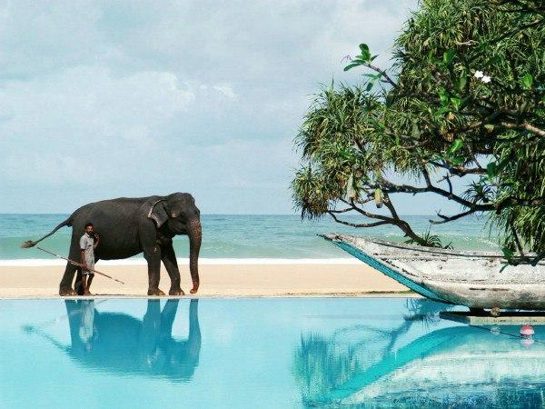 Гарячі пропозиції! Шрі Ланка @ Туроператор «Queen`s Travel»